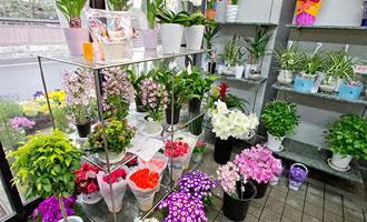 冬でも観葉植物をレンタル・販売しています