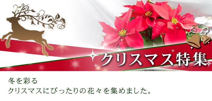 クリスマス特集~冬を彩るクリスマスにピッタリの花々を集めました~
