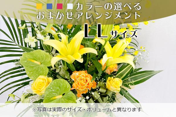 omakase-arrangement-10000